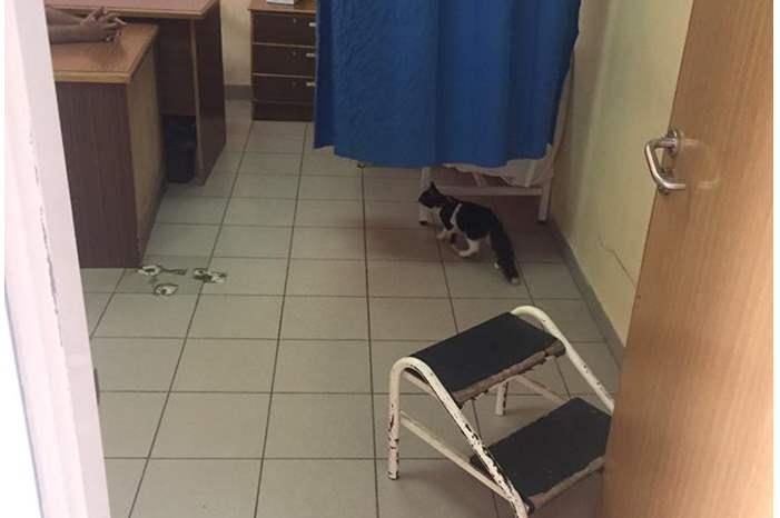 قطط في اقسام مستشفى ايدون !!!