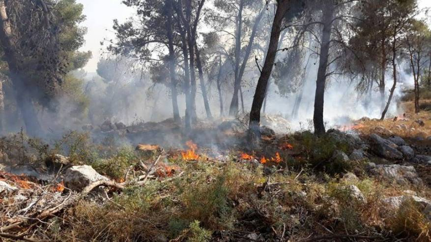 السيطرة على حريق غابة الشهيد عمر الرحامنة بالبلقاء