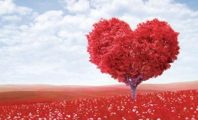 مدة انتهاء صلاحية الحب