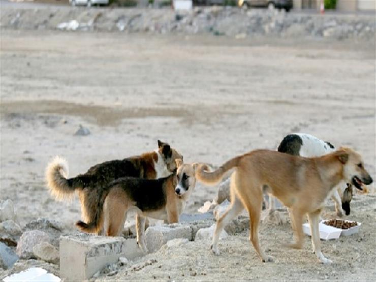 هلع في ابوعلندا بسبب انتشار الكلاب الضالة ...