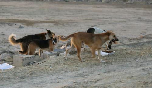 شكاوى من انتشار الكلاب الضالة في مادبا ...