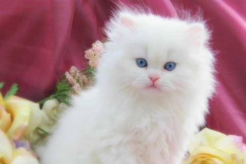 كيف أخبر ابنتي بوفاة قطتها المفضلة ؟