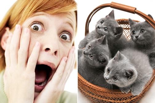 كدت أن أموت بسبب خوفي من القطط ..